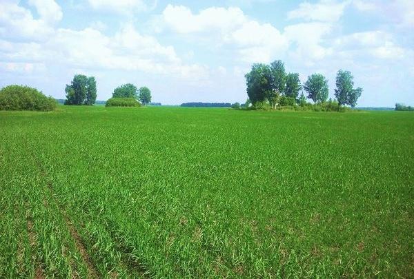 Недорогие земельные участки