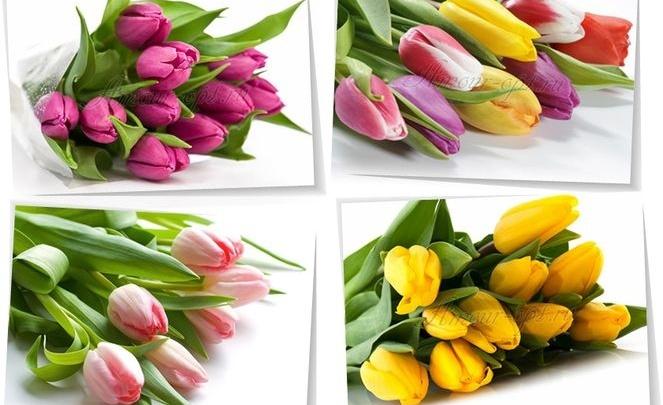 «Отечественные» тюльпаны к 8 Марта — от 45 рублей!